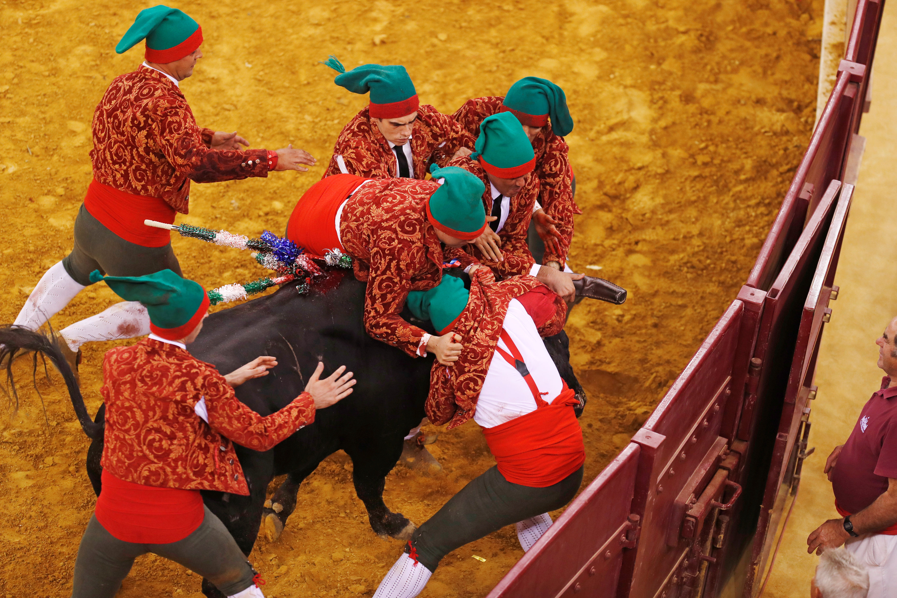 جانب من مصارعة الثيران فى البرتغال