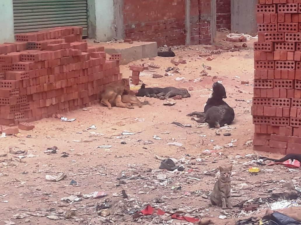 انتشار الكلاب الضالة فى الشوارع