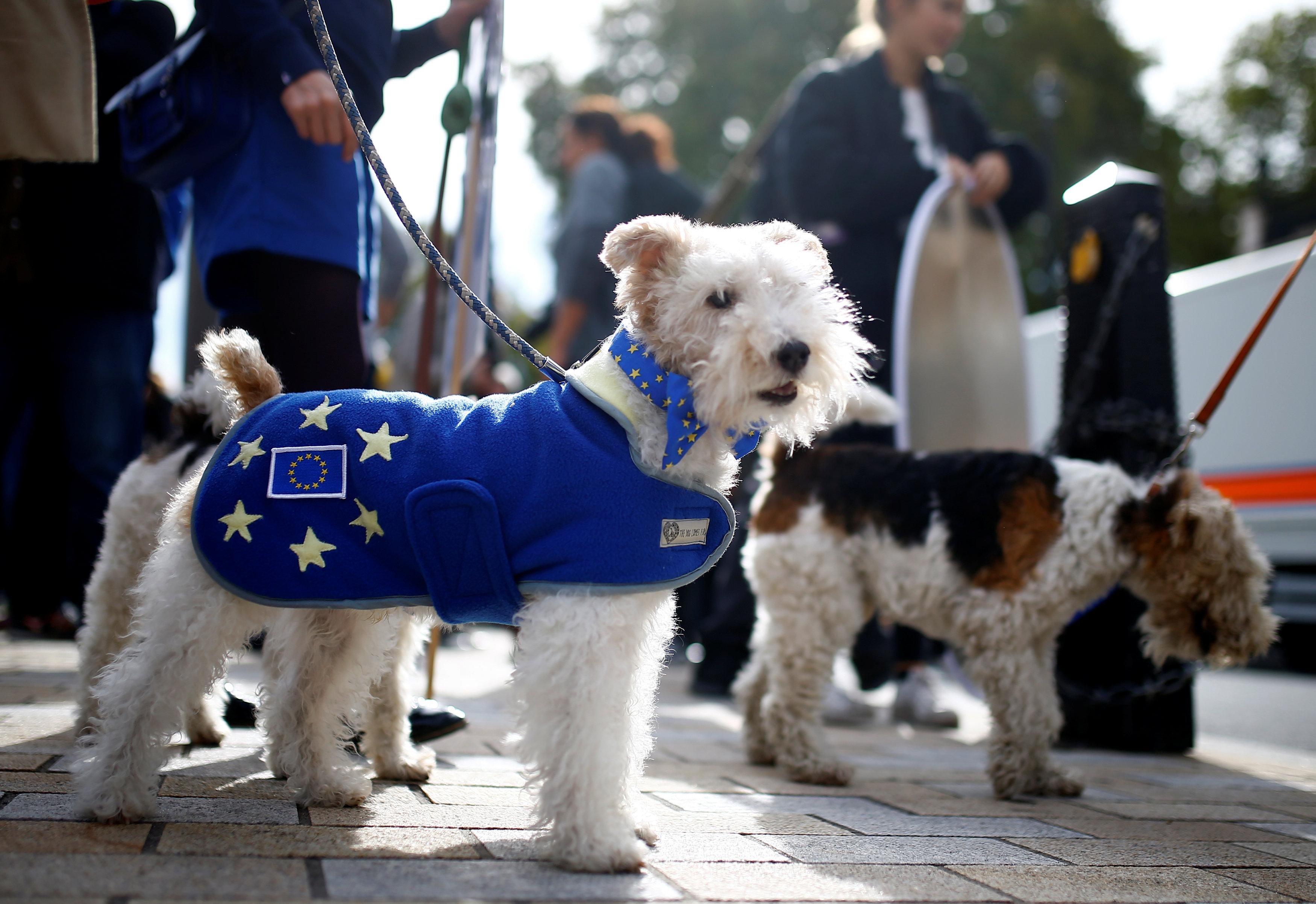 مظاهرة لأصحاب الكلاب فى لندن للمطالبة بالبقاء فى الاتحاد الأوروبى