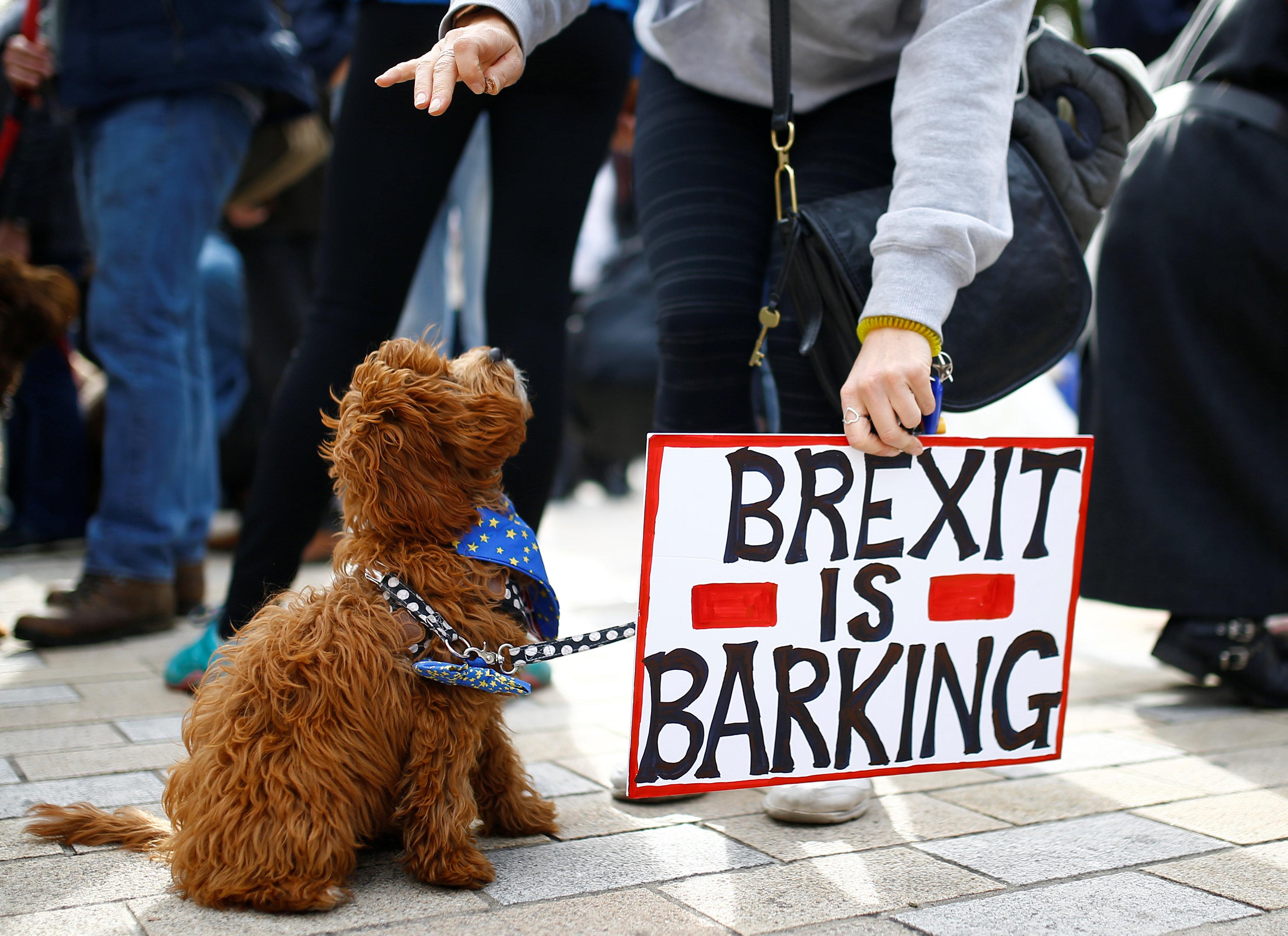 جانب من الاحتجاجات فى لندن
