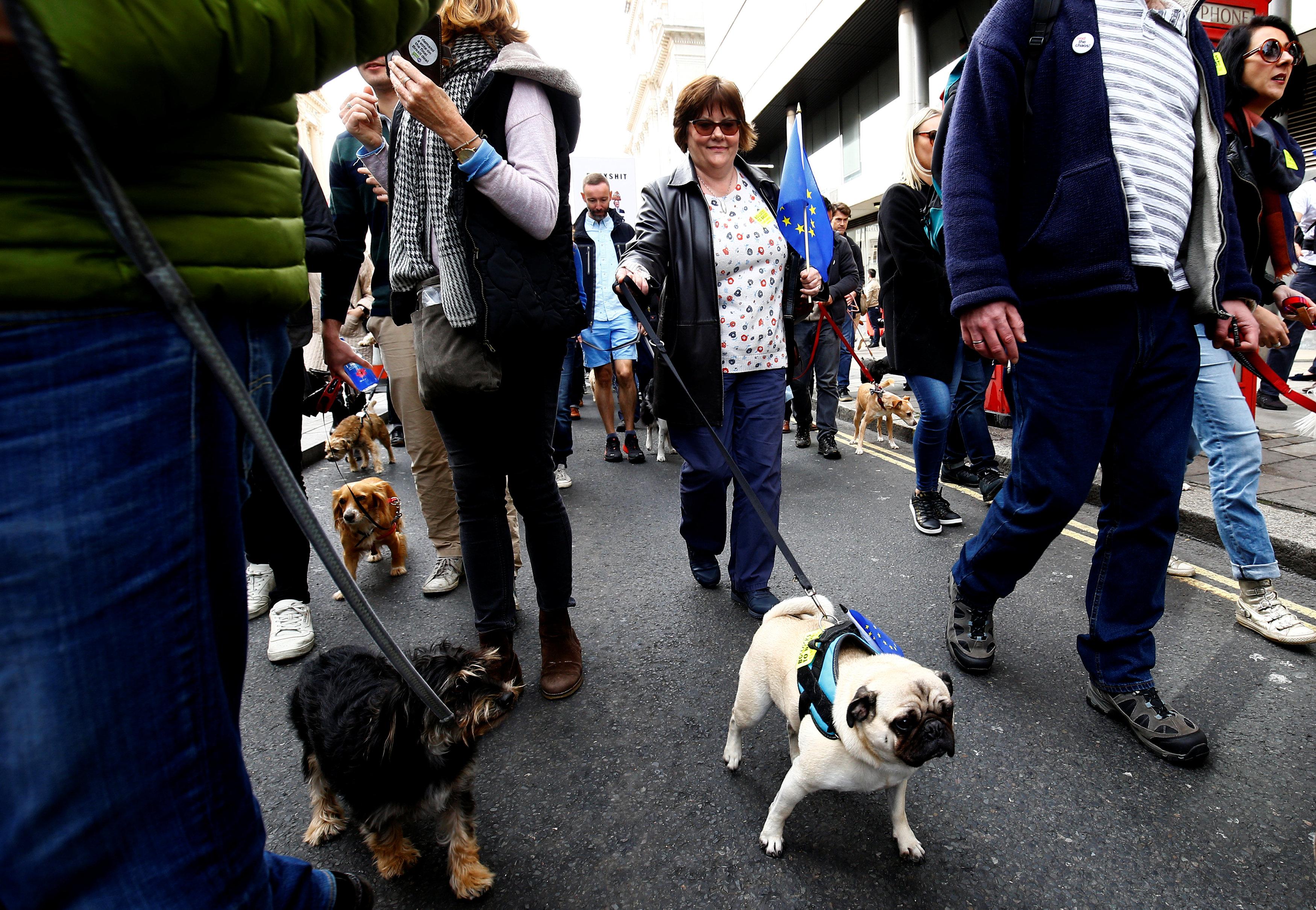 مسيرة لأصحاب الكلاب فى لندن للمطالبة بالبقاء فى الاتحاد الأوروبى