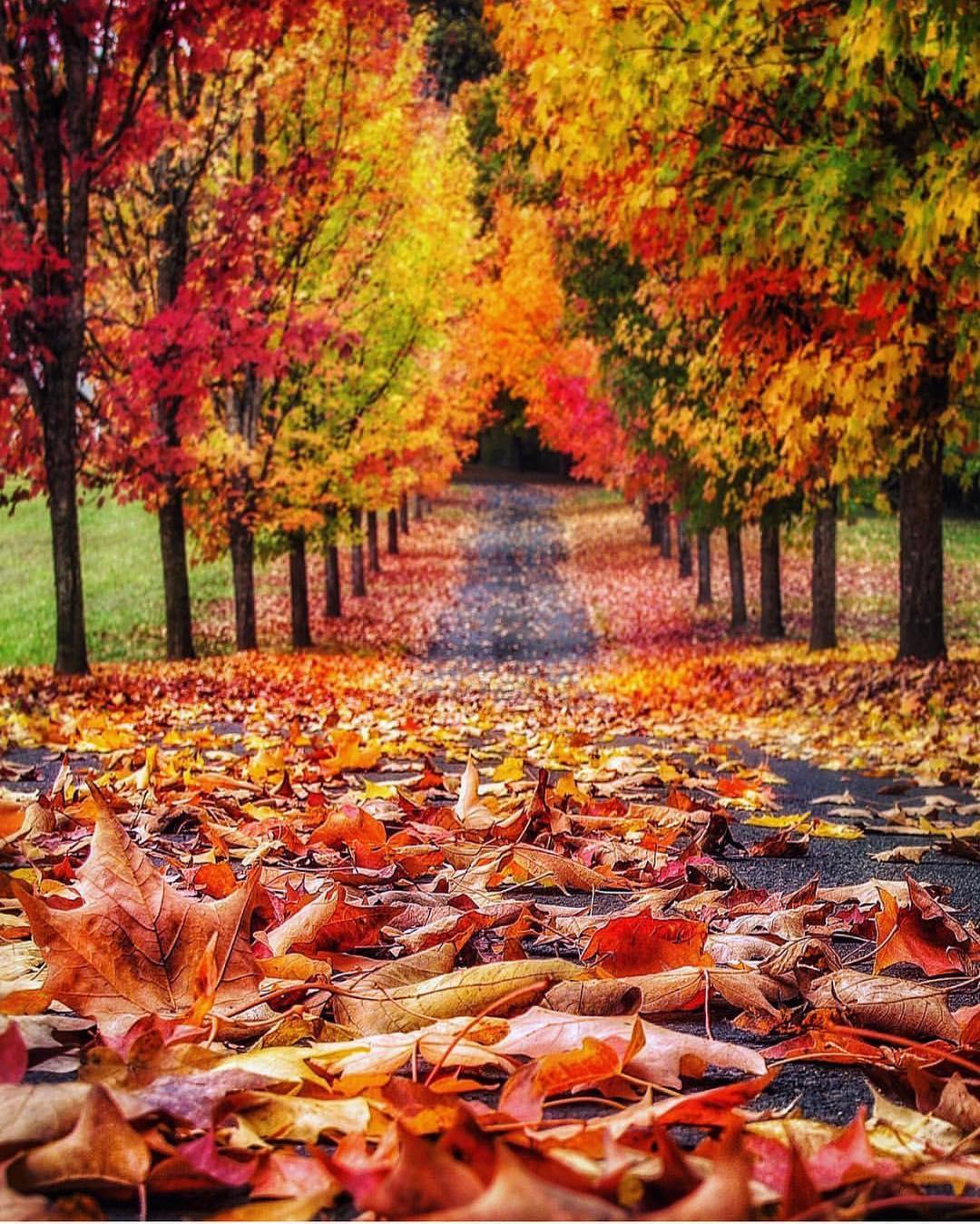الخريف فى ولاية اوريجون الأمريكية