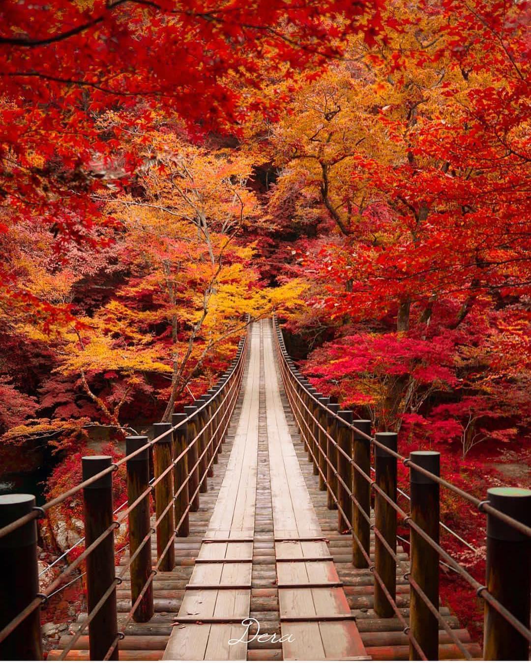 الخريف فى اليابان