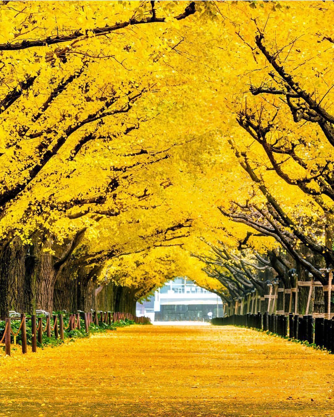 العاصمة اليابابنية طوكيو فى الخريف