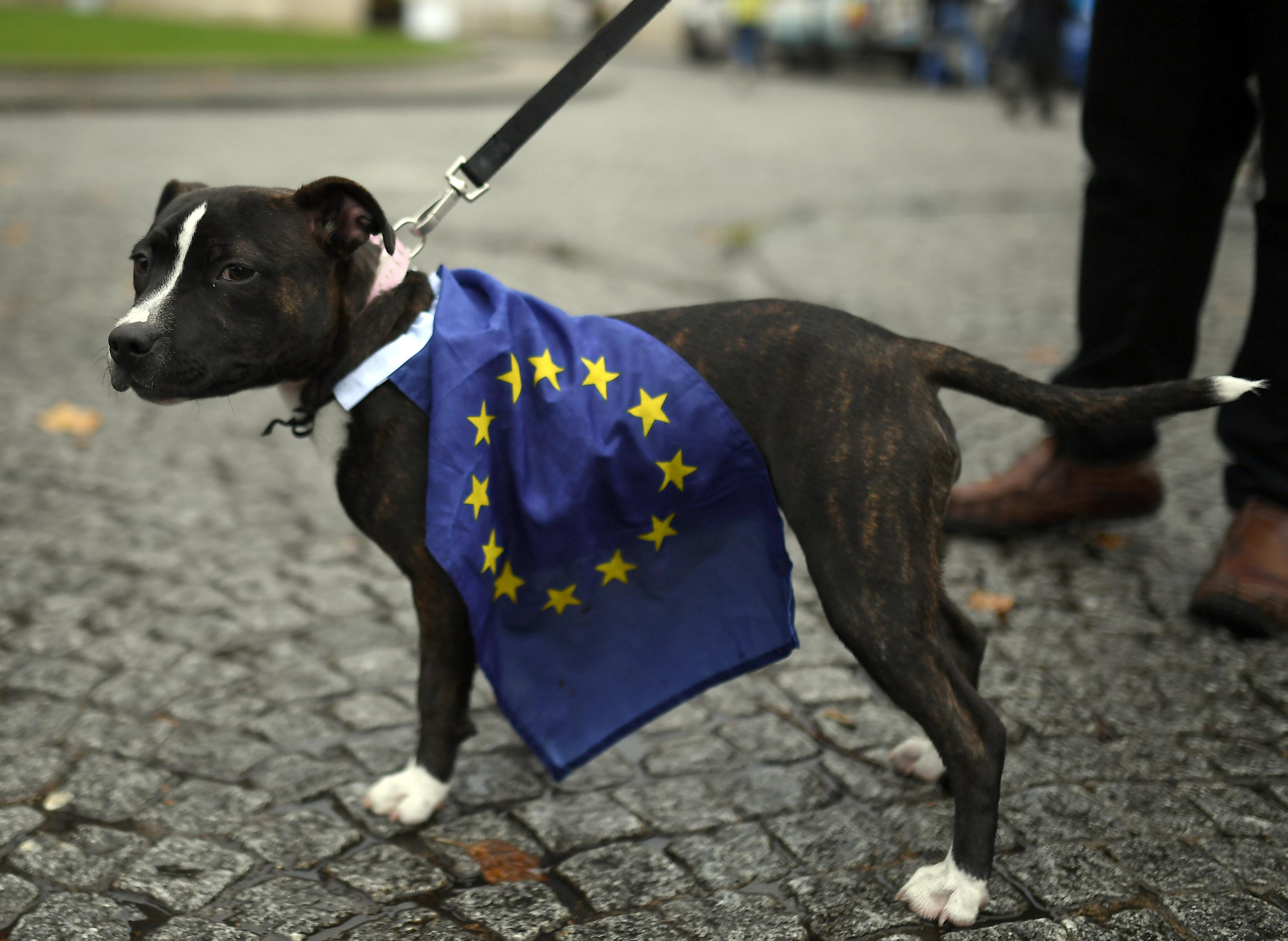 أحد الكلاب المشاركين فى المسيرة