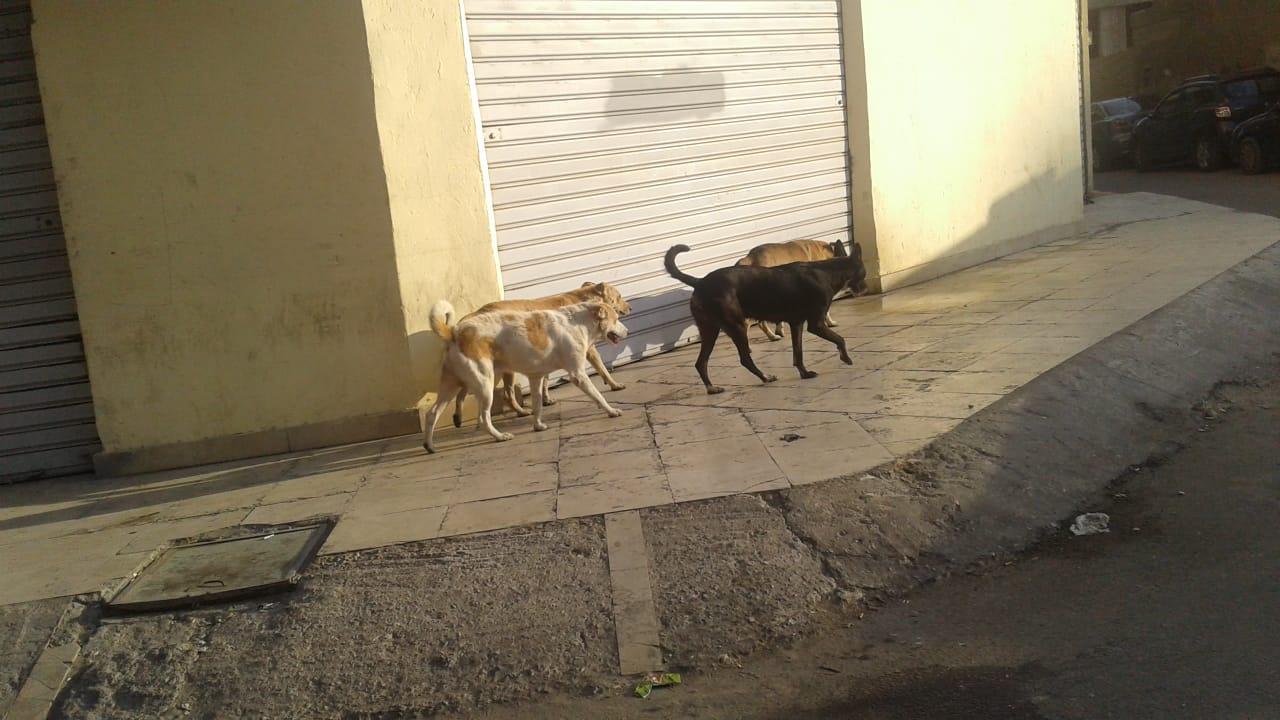 انتشار كلاب ضالة