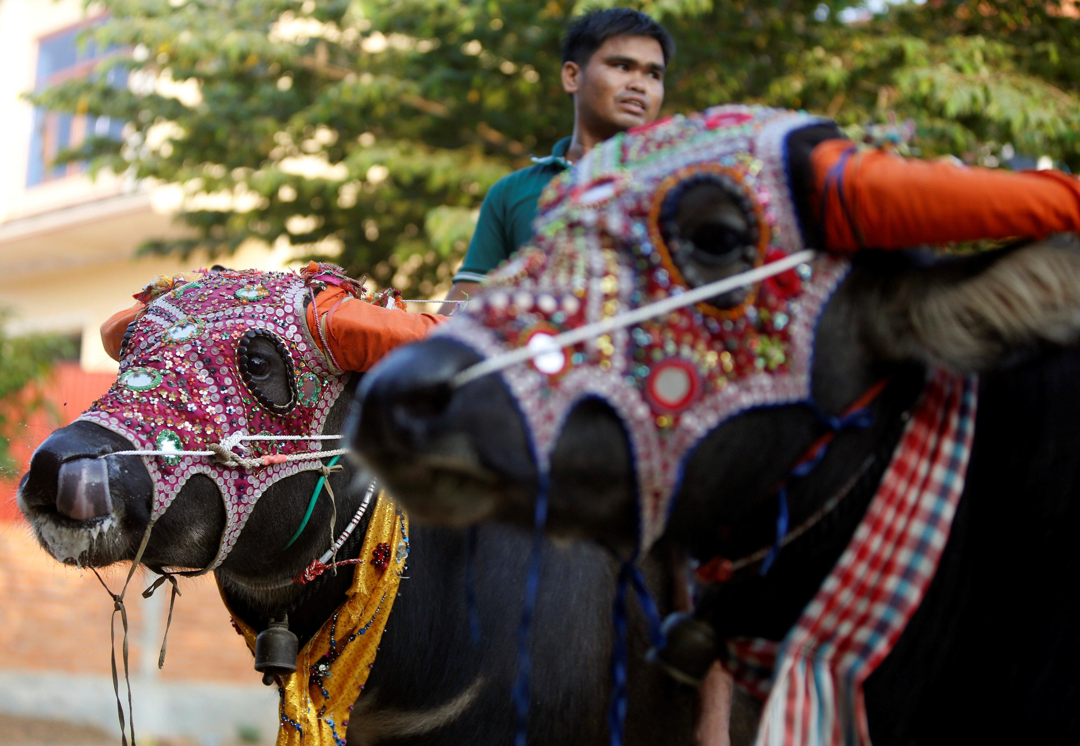 ركوب الحيوانات أحد مظاهر الاحتفال بمهرجان الموتى