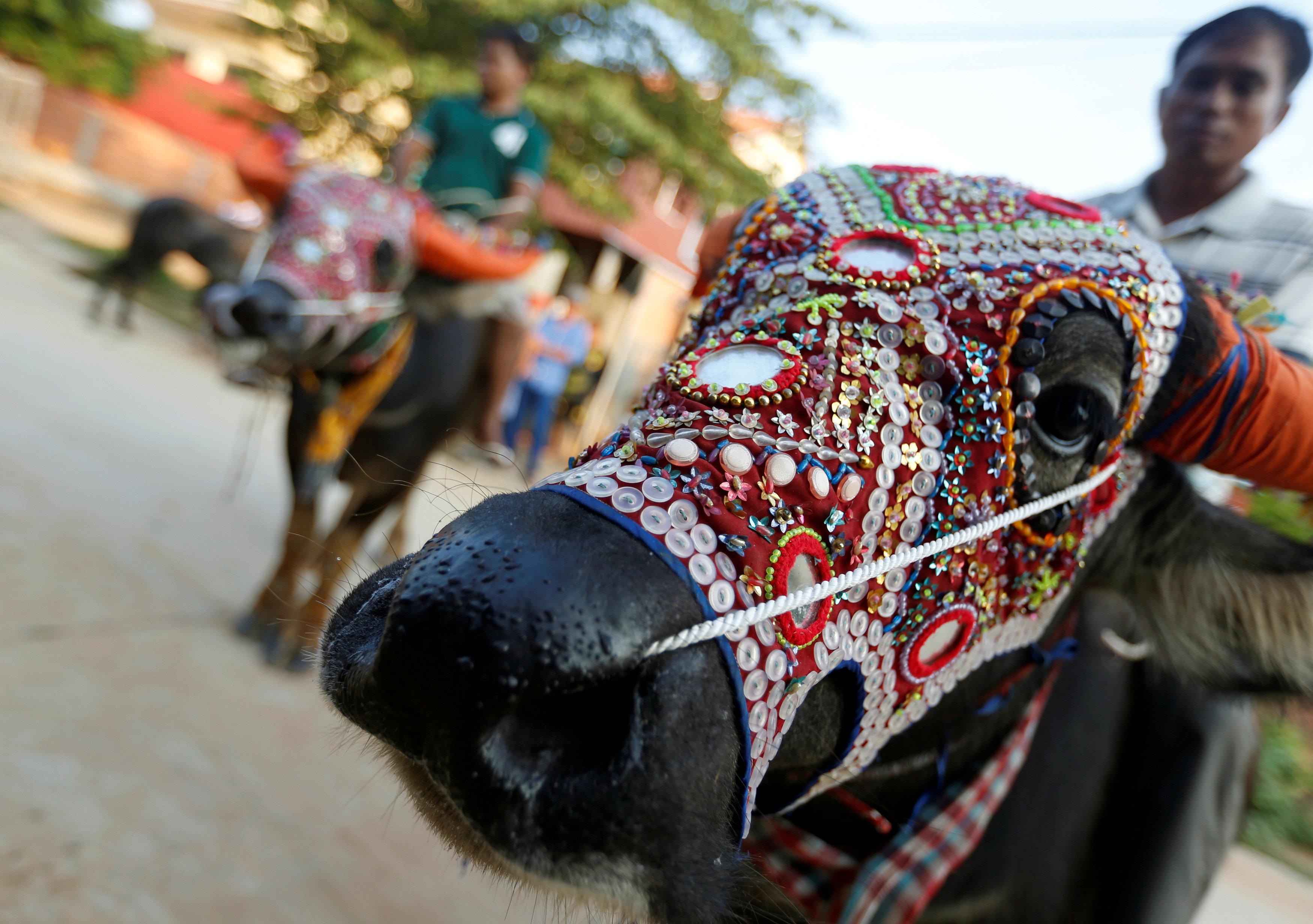 يضعون الأقنعة على وجوه الحيوانات احتفالا بمهرجان الموتى