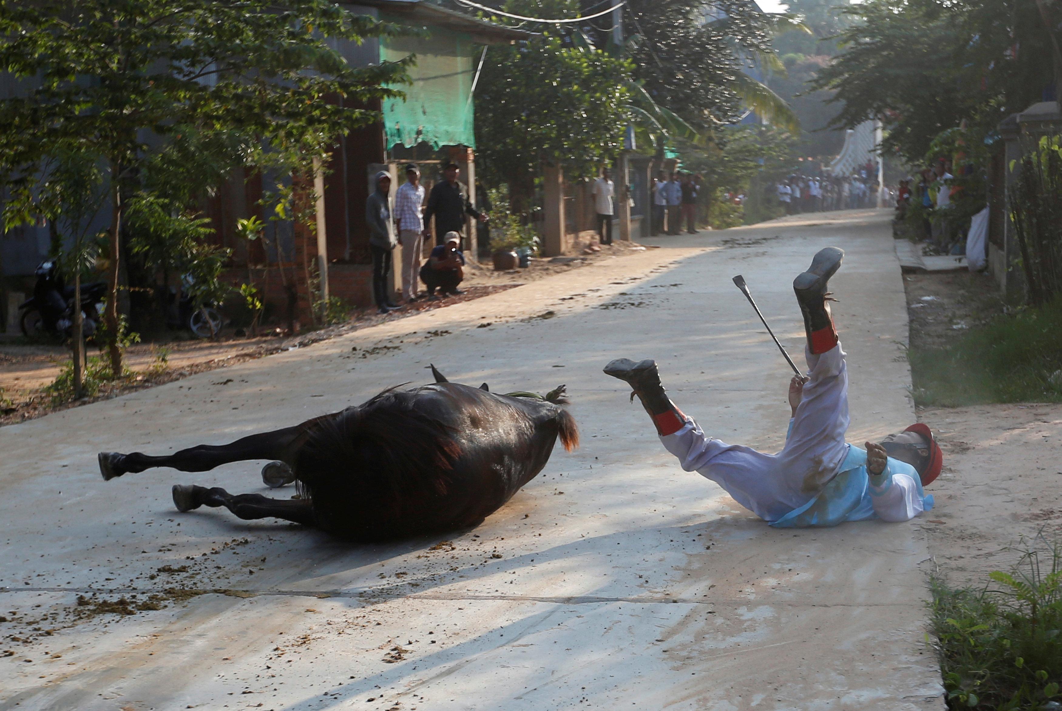 مواطن يسقط من ظهر أحد الحيوانات أثناء الاحتفال