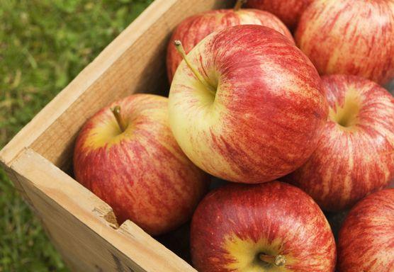 اضرار التفاح2