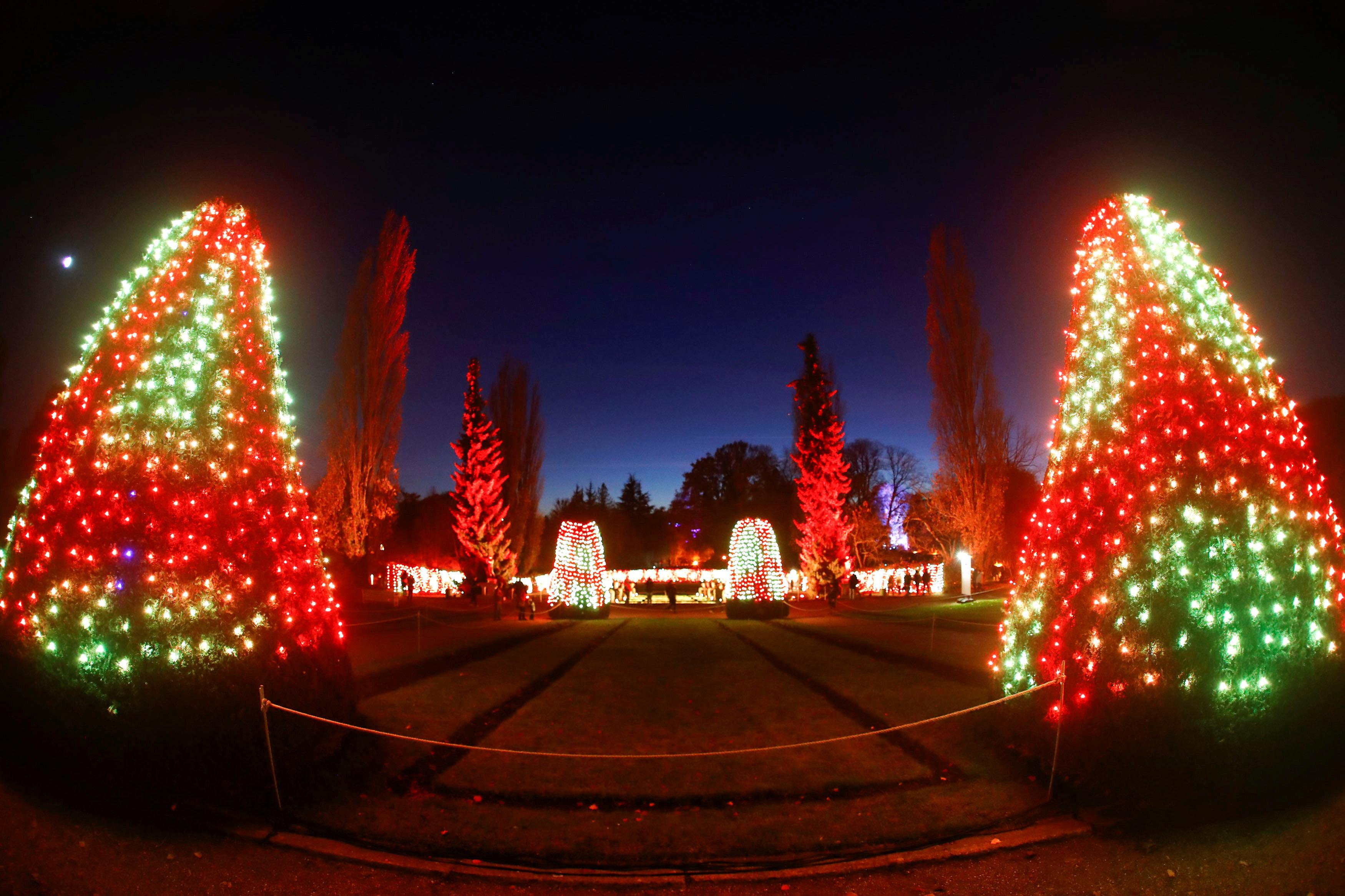 جانب من أشجار الكريسماس