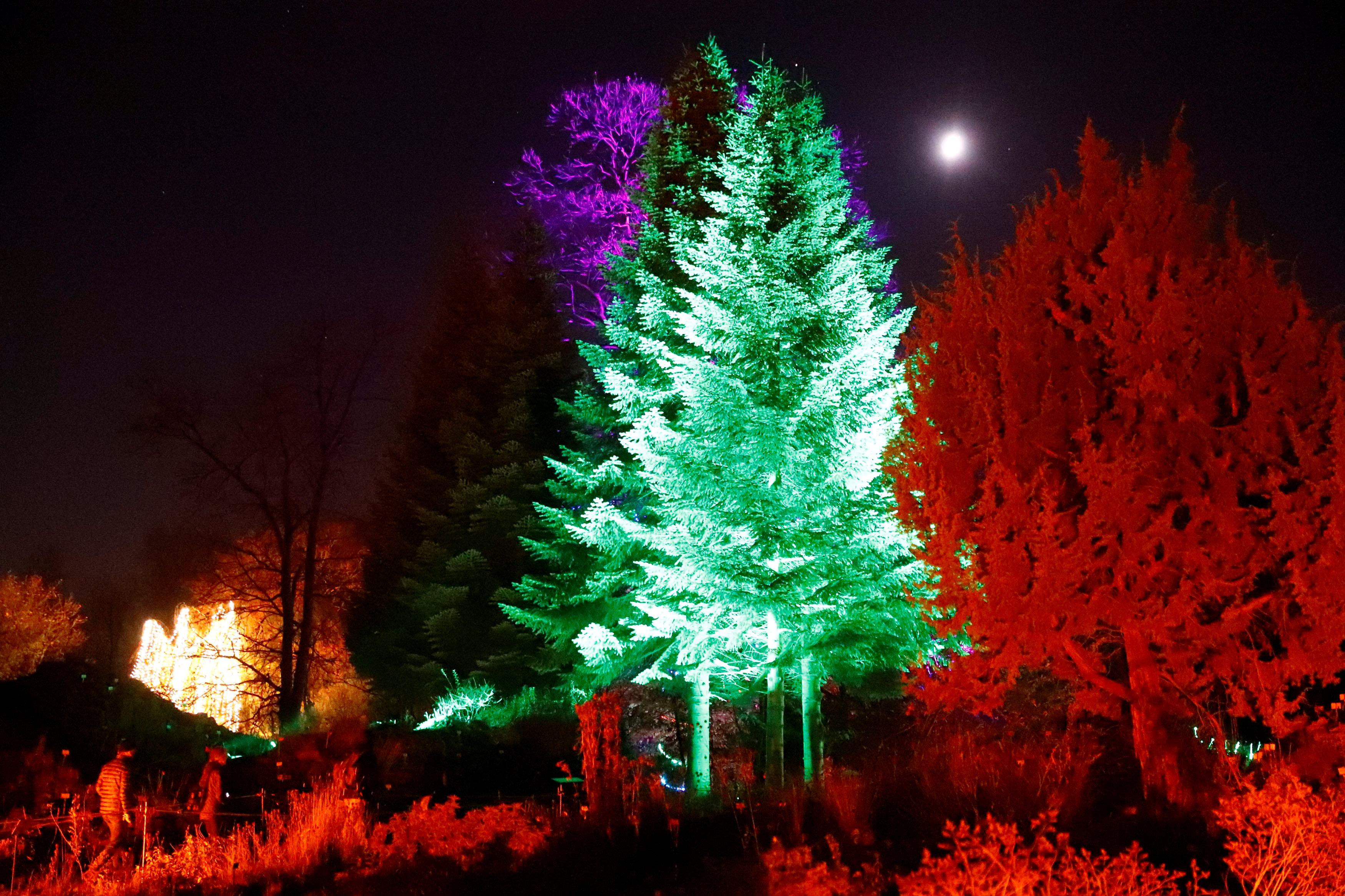 جانب من أشجار الكريسماس بألمانيا
