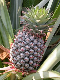 Benefits of healthy pineapple