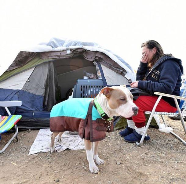 سكان كاليفورنيا فى المخيمات (4)