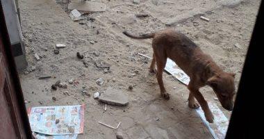 الكلاب الضالة تحاصر عمارات جسر السويس