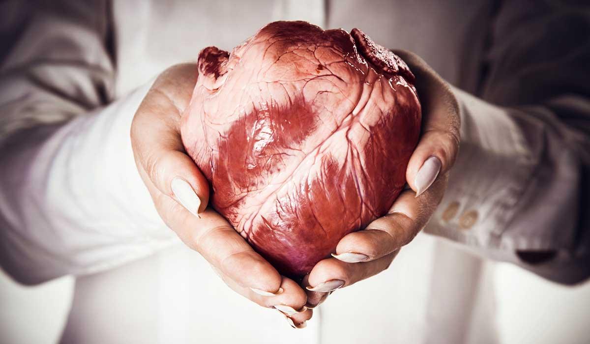 سرطان القلب2