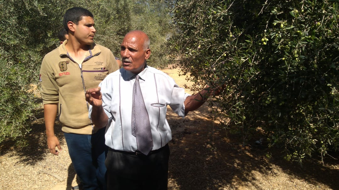 لجان  لفحص شكاوى مزارعي الزيتون (2)