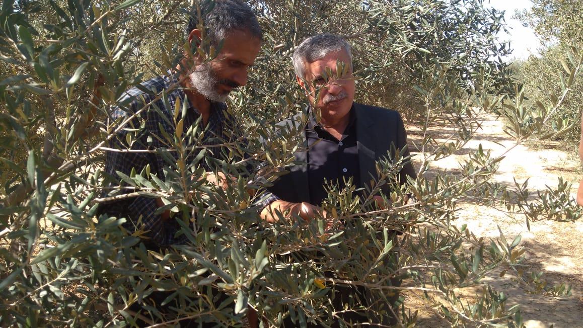 لجان  لفحص شكاوى مزارعي الزيتون (3)