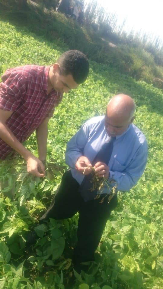 فحص زراعات الفاصوليا بمركز أبو المطامير بالبحيرة  (7)