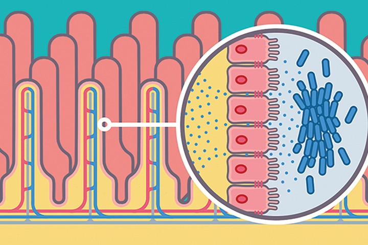 تكاثر البكتيريا