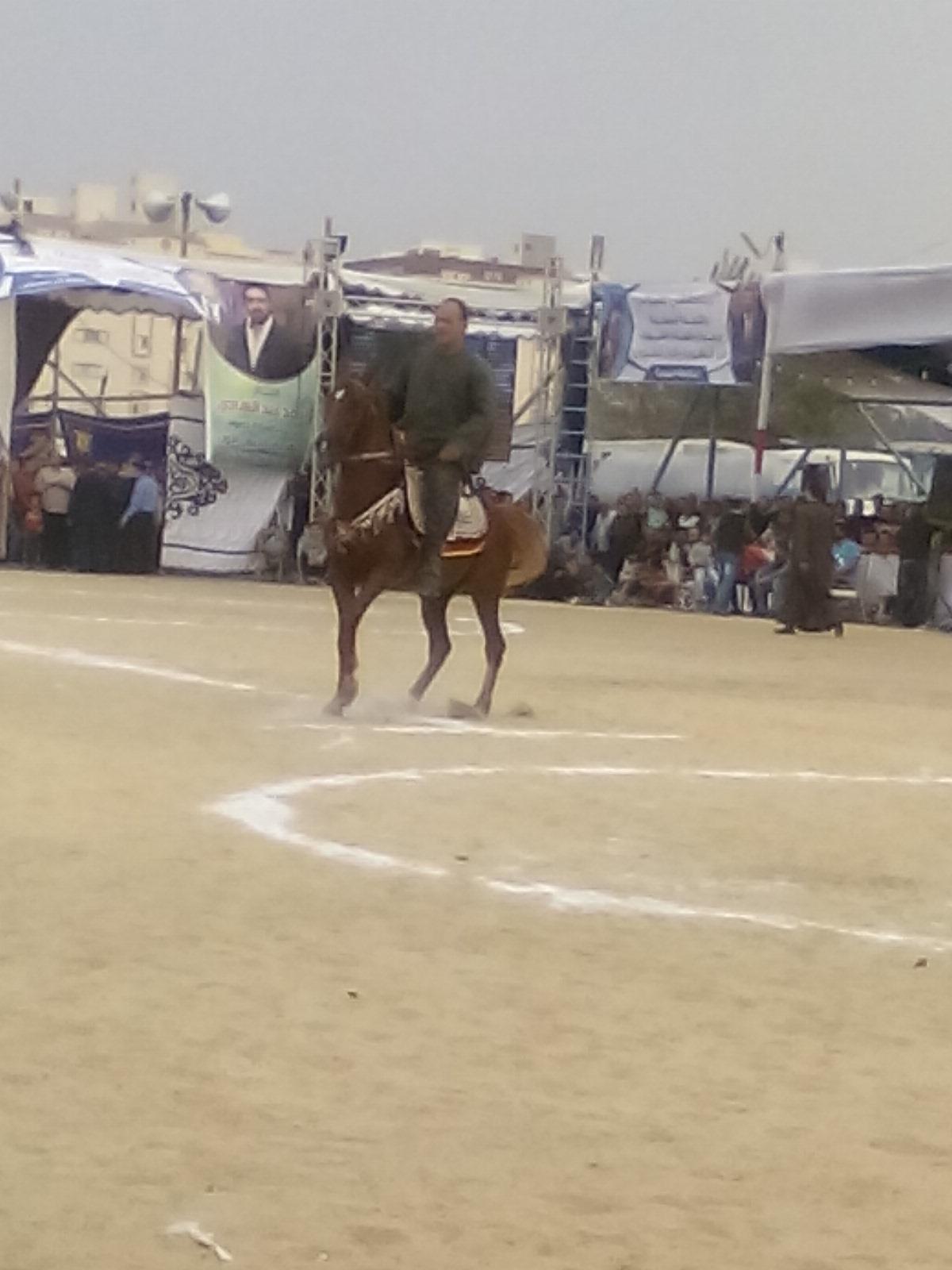مهرجان الخيول العربية  (6)