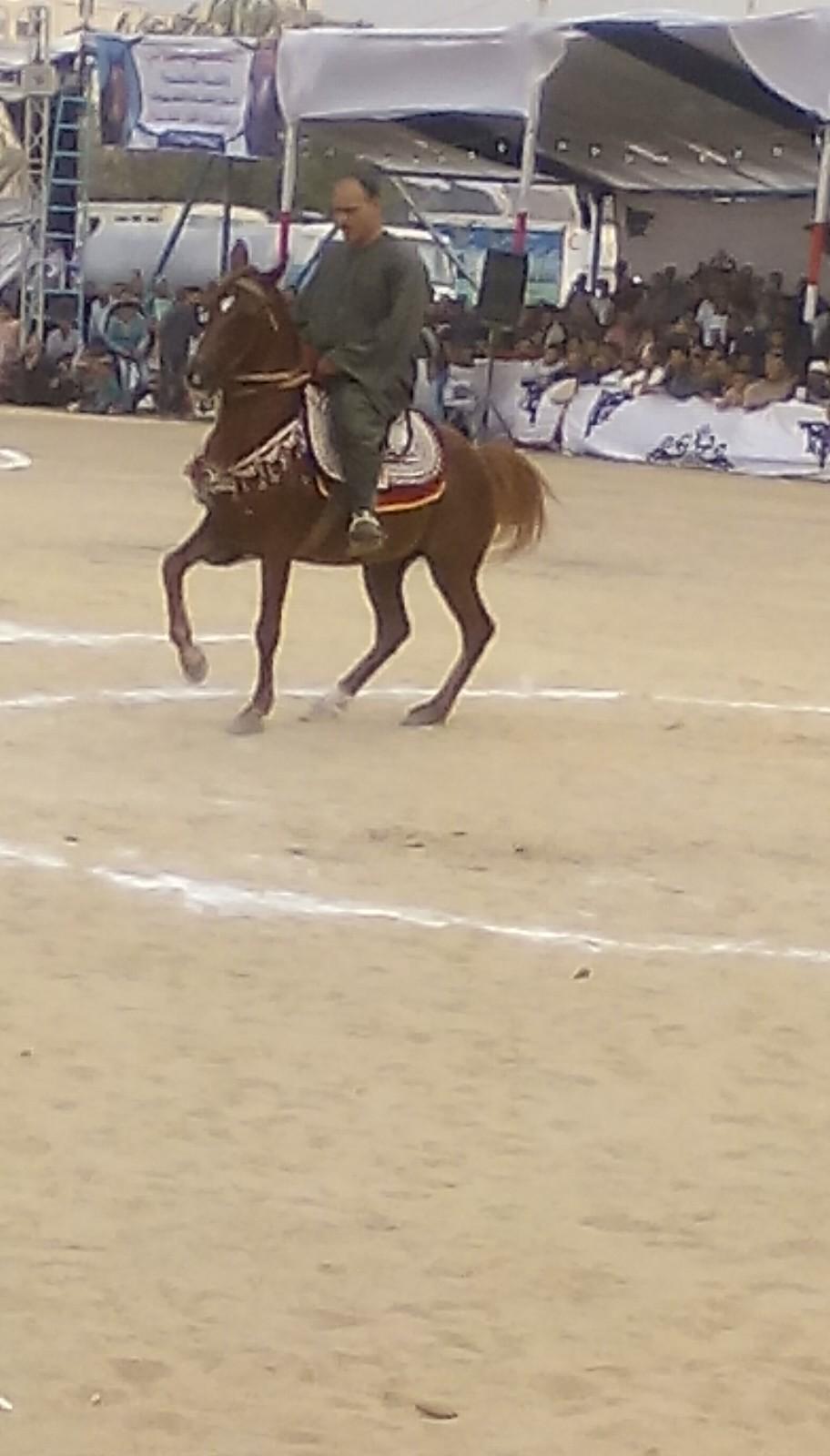 مهرجان الخيول العربية  (7)