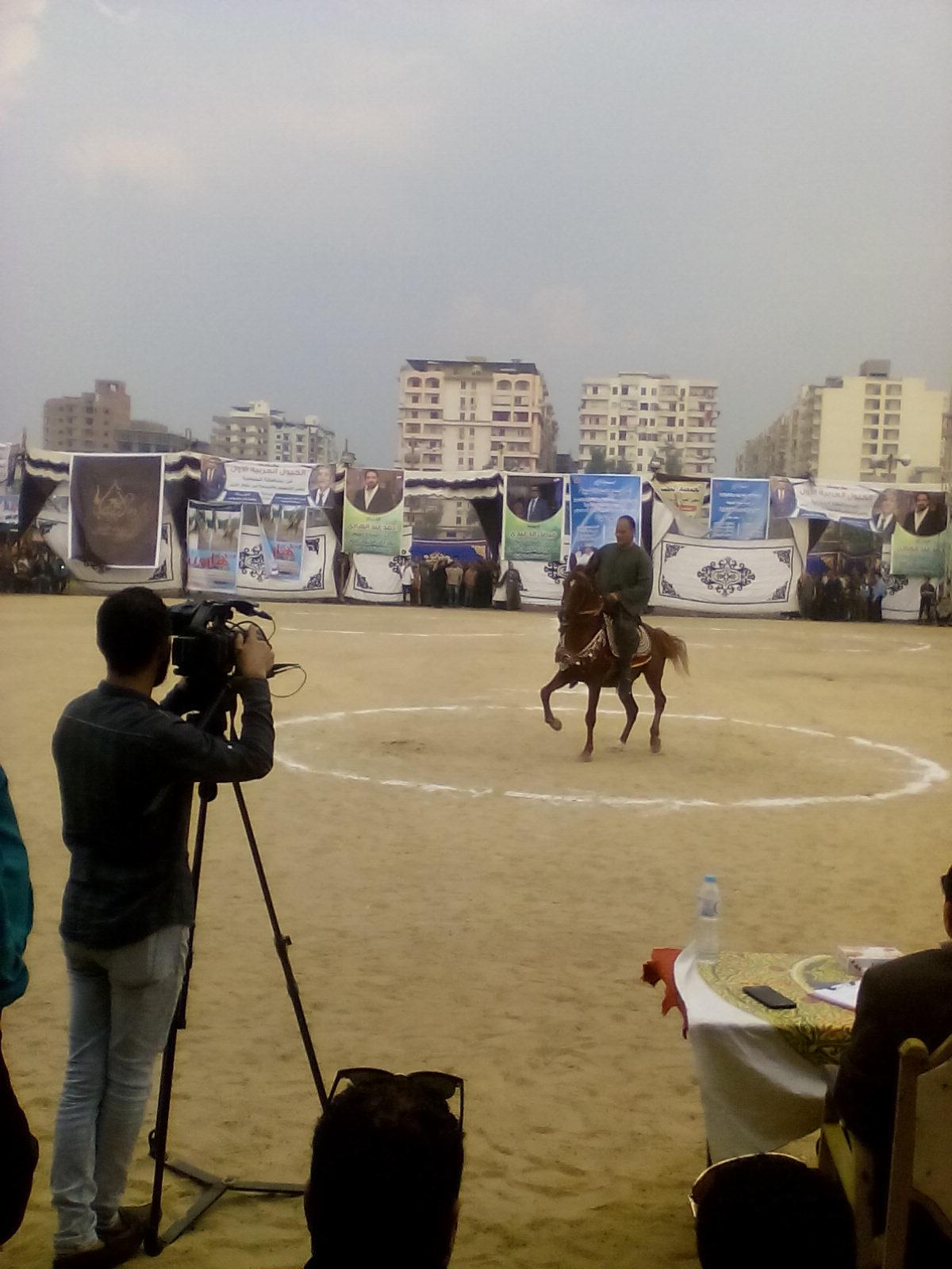 مهرجان الخيول العربية  (8)