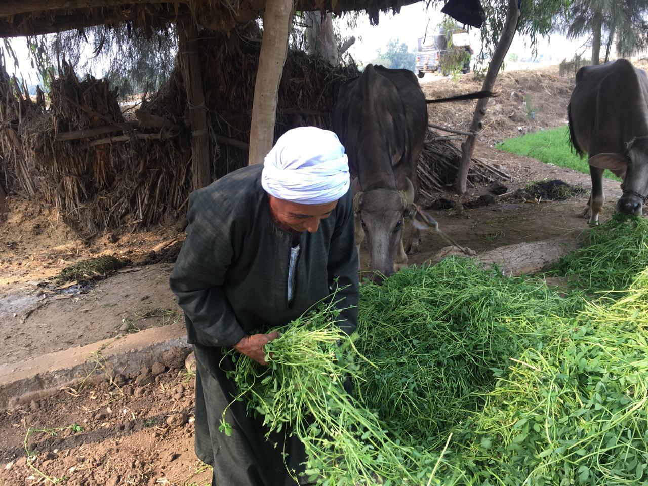 اراء المزارعين والفلاحين بمباراة الاهلى  (10)