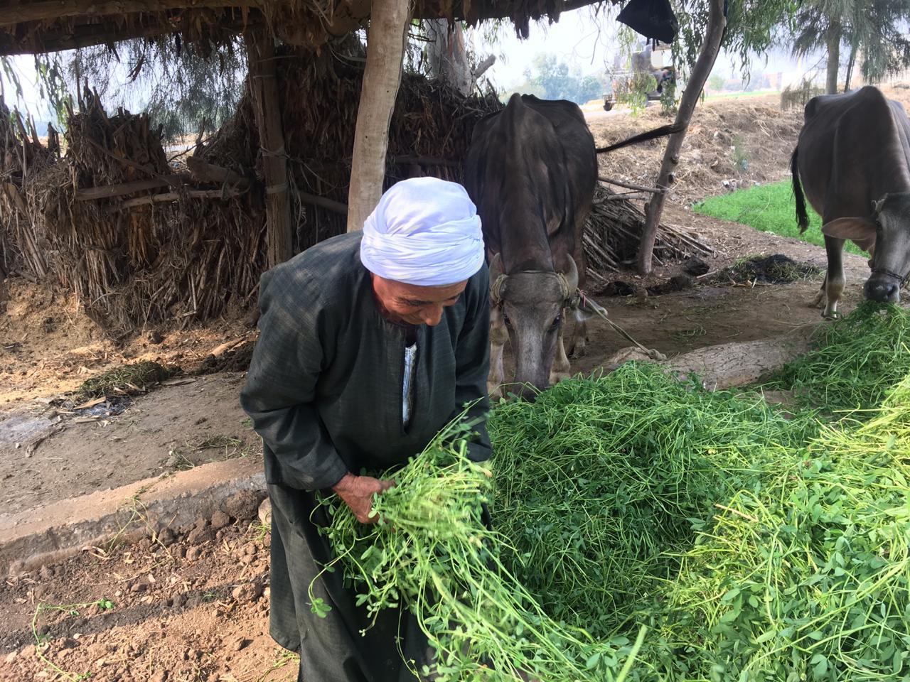 اراء المزارعين والفلاحين بمباراة الاهلى  (13)