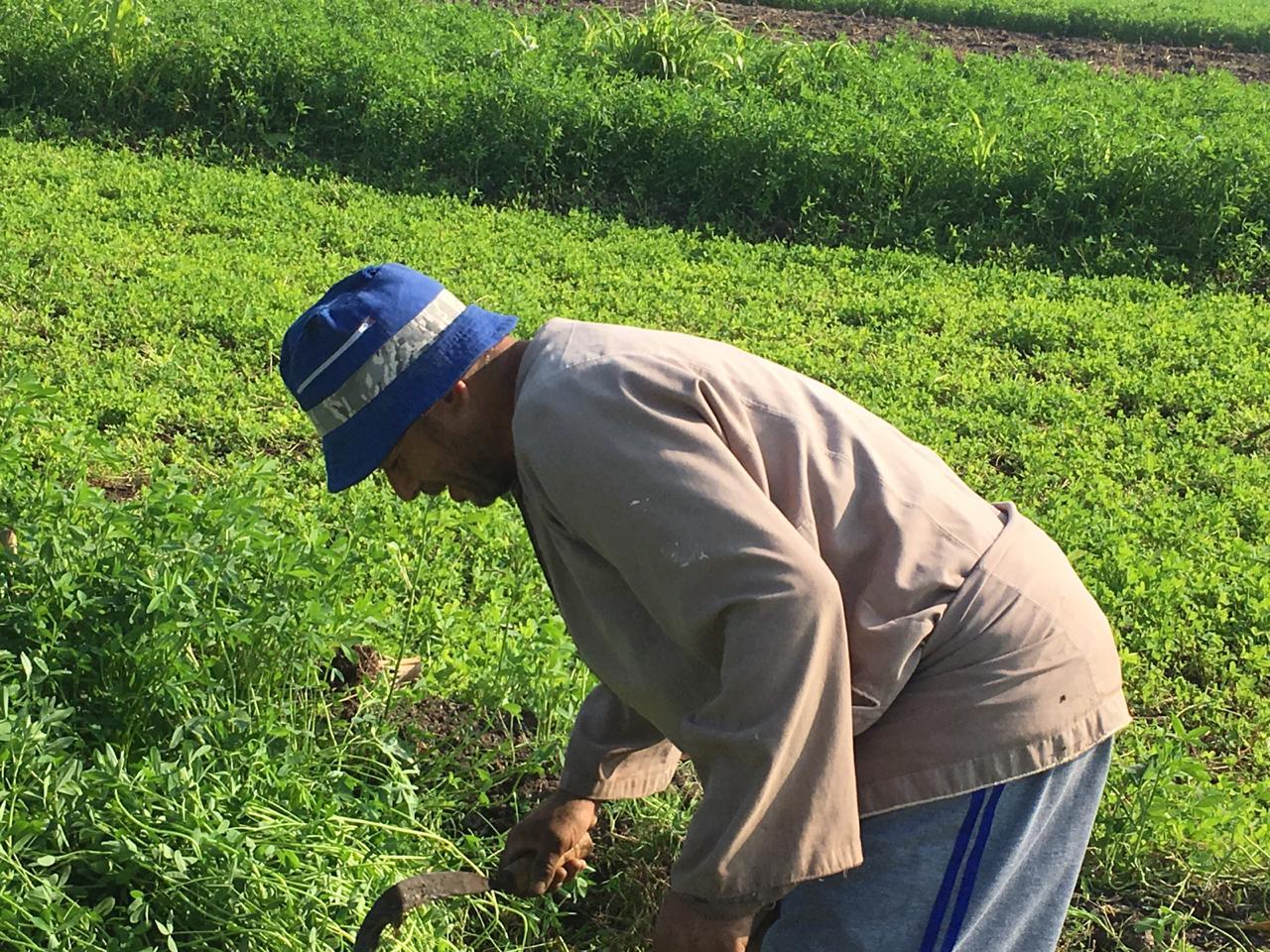 اراء المزارعين والفلاحين بمباراة الاهلى  (1)
