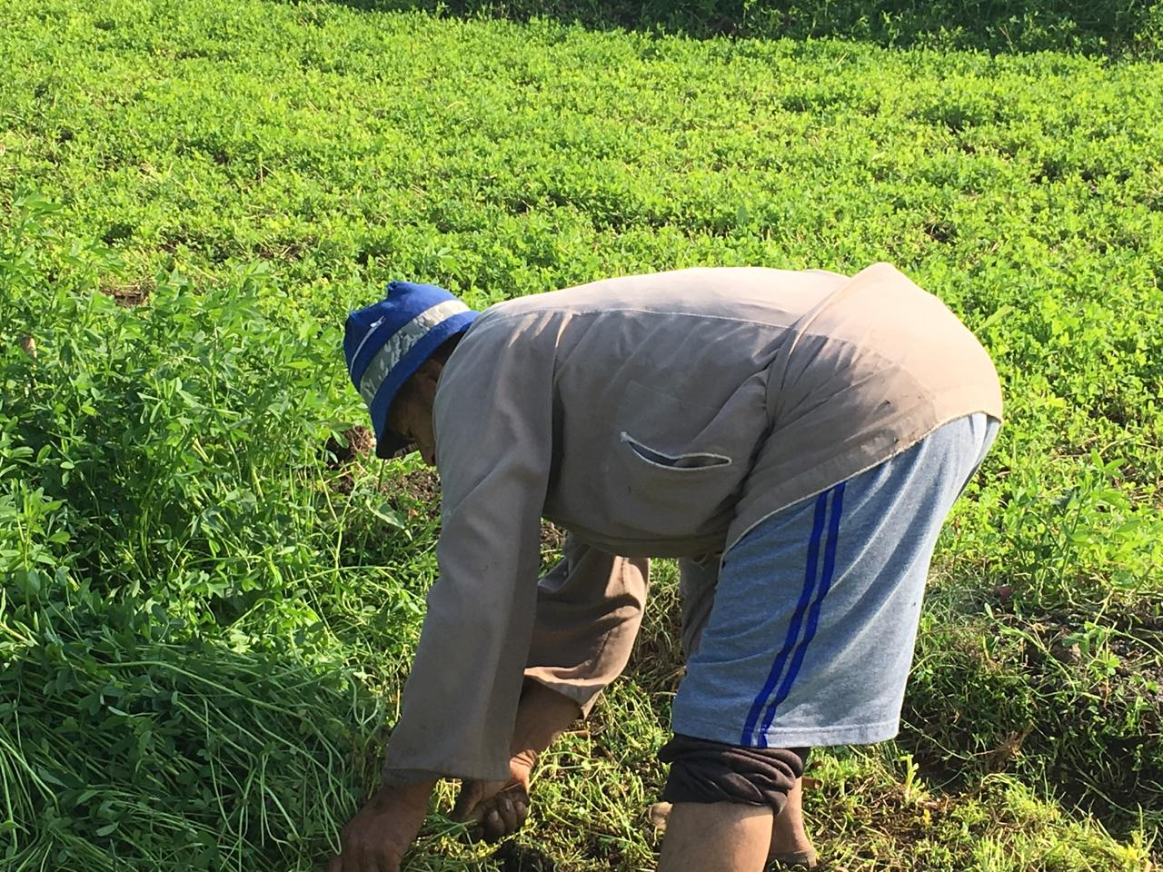 اراء المزارعين والفلاحين بمباراة الاهلى  (4)