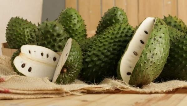 فاكهة القشطة2