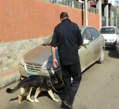 الكلاب البوليسية تشارك في الحملات
