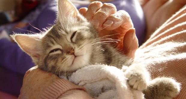 حساسية القطط2