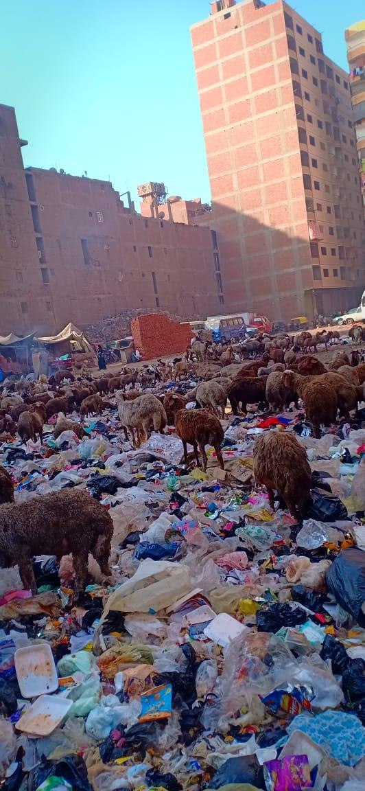 انتشار الماعز والخرفان