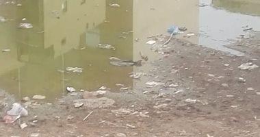 برك مياه راكدة بقرية بالغربية