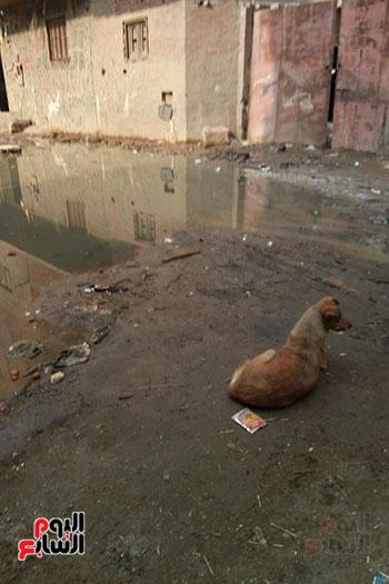 انتشار مياه الصرف الصحى (11)