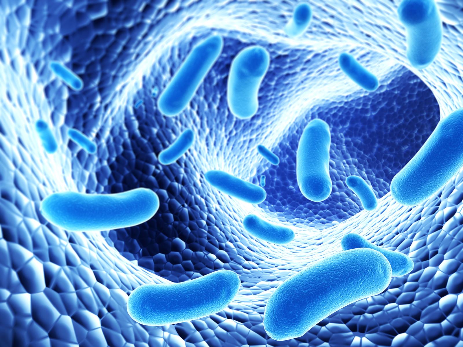 البروبايوتيك البكتيريا النافعة فى الجهاز الهضمى