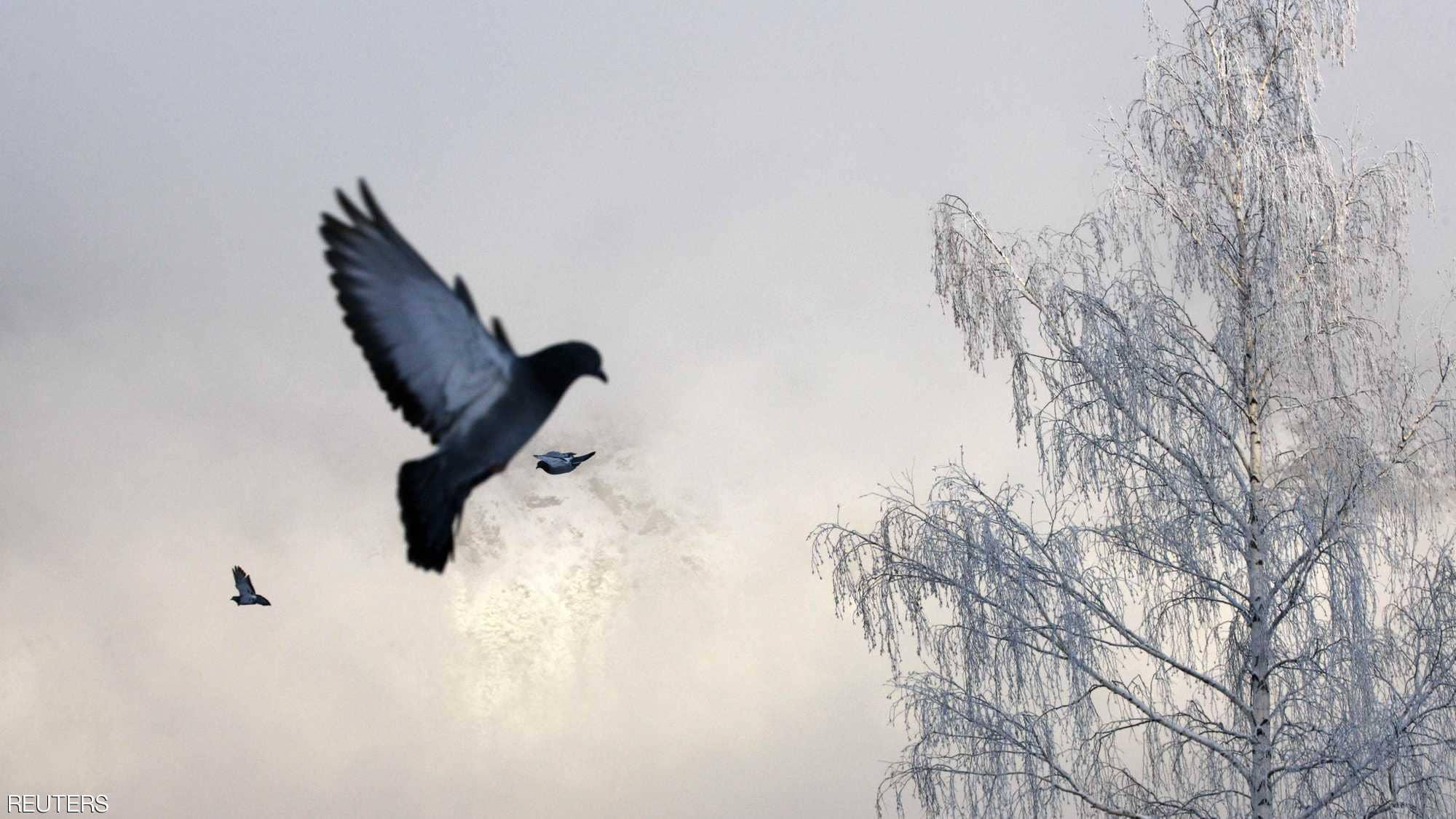 طائر يحلق فوق الأشجار المتجمدة