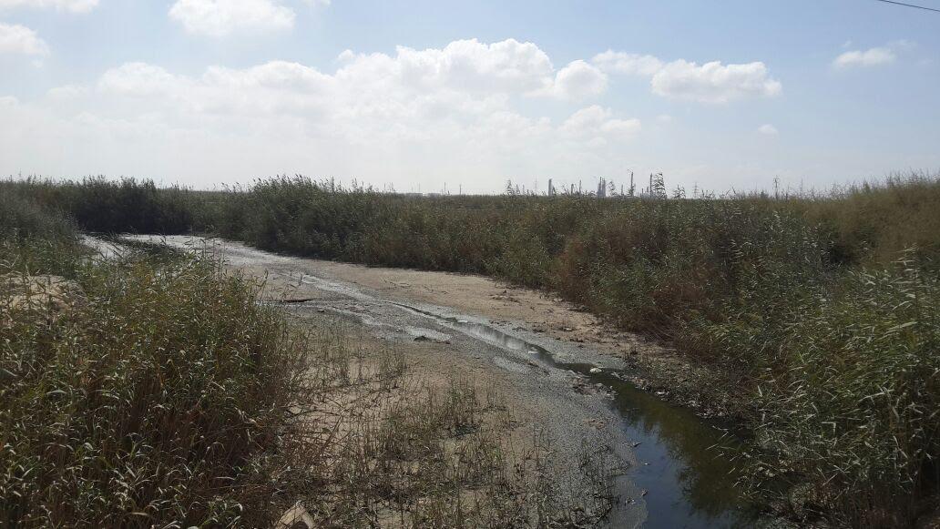 بحيرة مريوط (6)