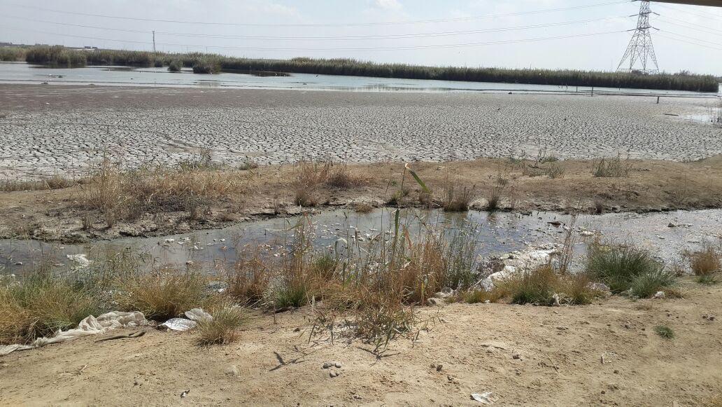 بحيرة مريوط (8)