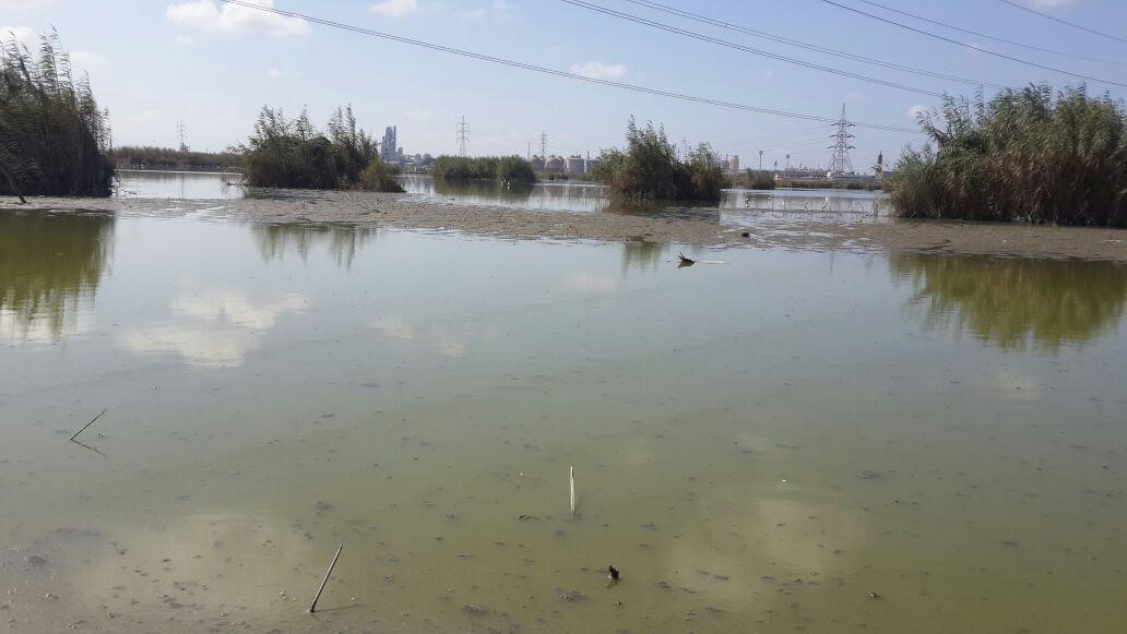 بحيرة مريوط (4)