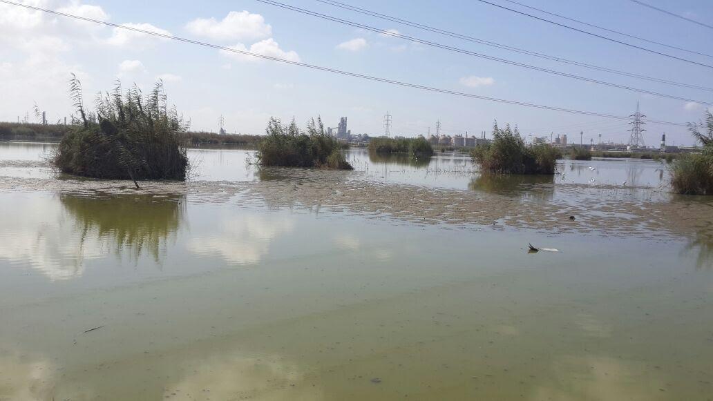 بحيرة مريوط (5)