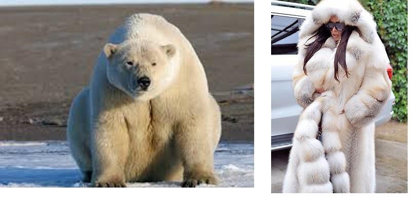5- الدب القطبي