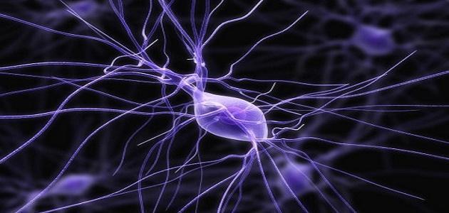 حقائق عن الجهاز العصبى