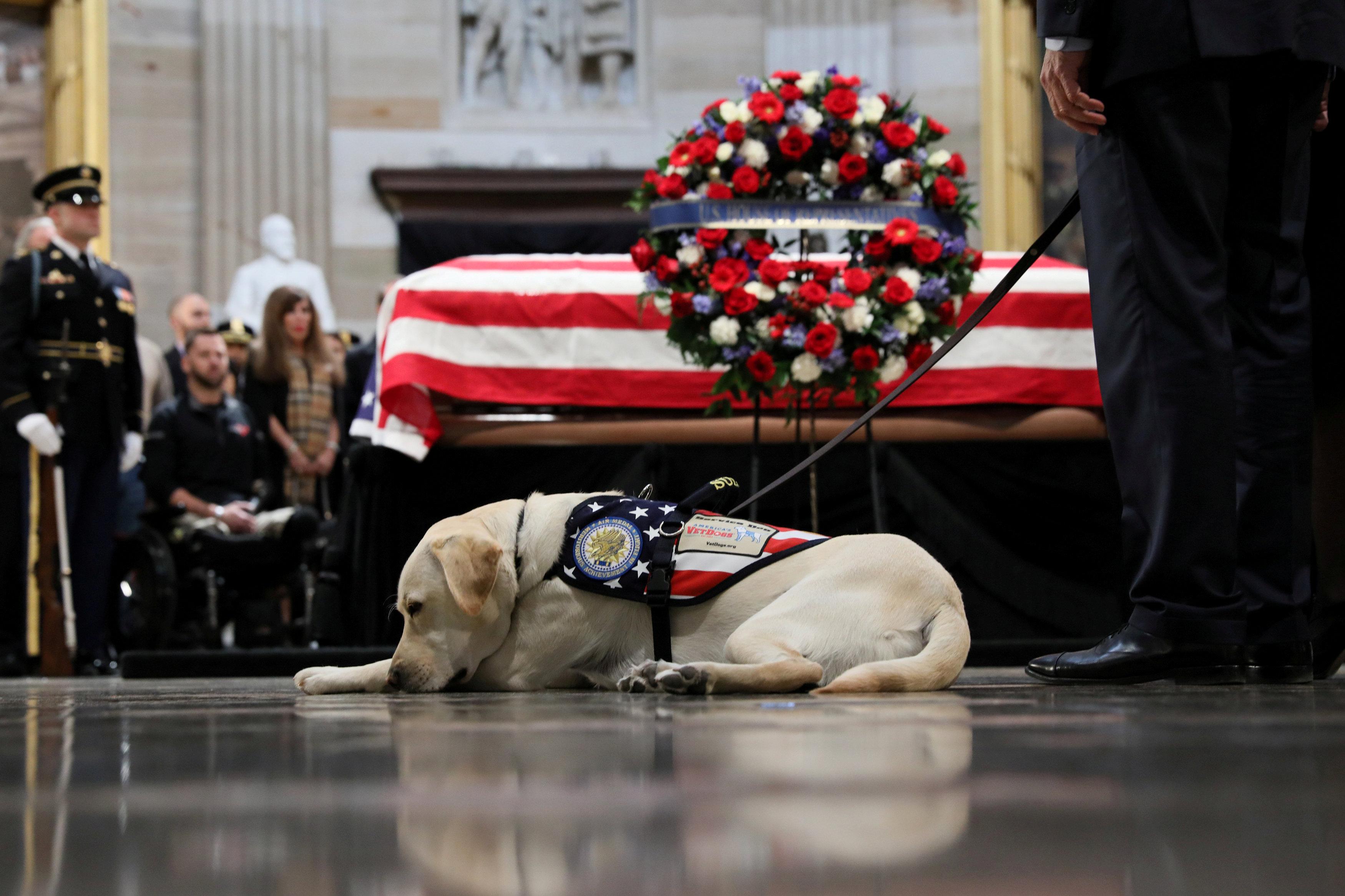 حزن كلب جورج بوش الأب على وفاه صاحبه
