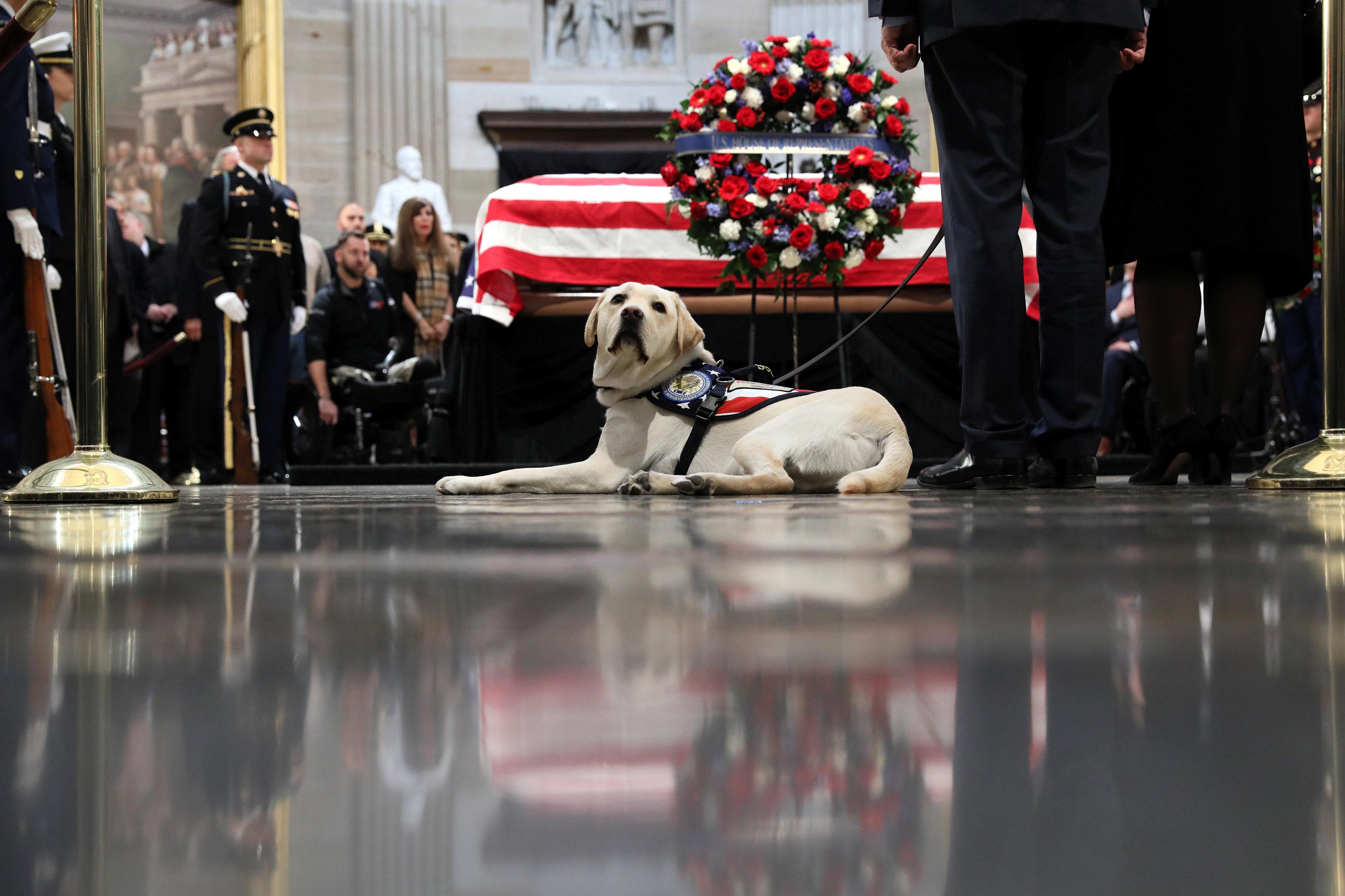 كلب جورج بوش الأب بجانب نعش صاحبه