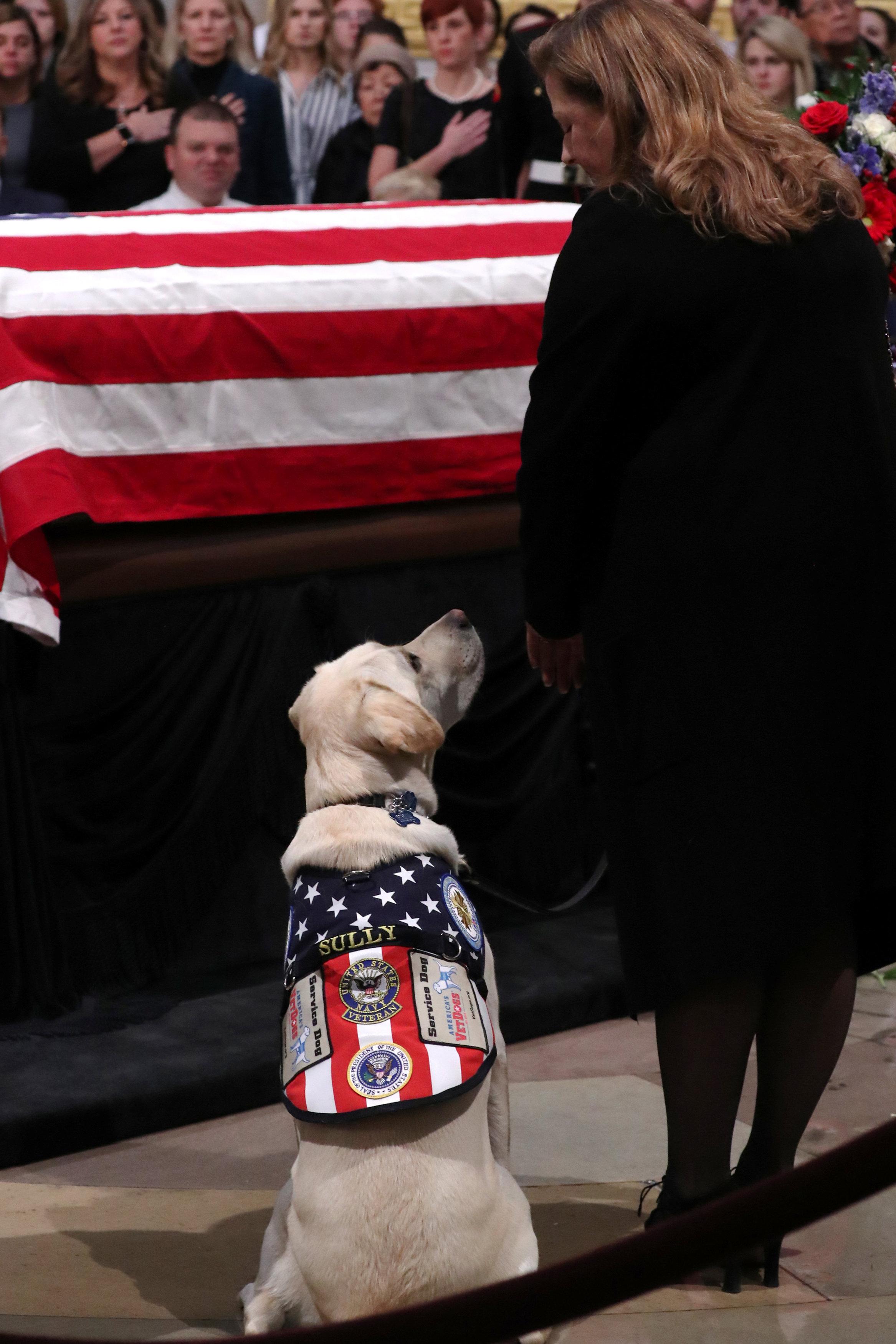 كلب جورج بوش الأب