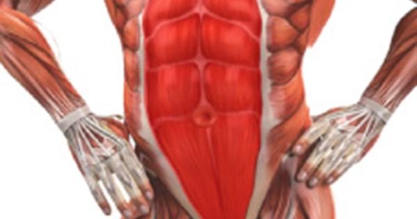 اعرف جسمك كم عدد عضلات البطن وأنواعها اليوم السابع