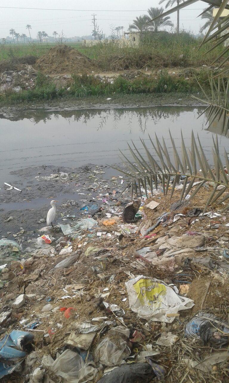 القمامة المنتشرة
